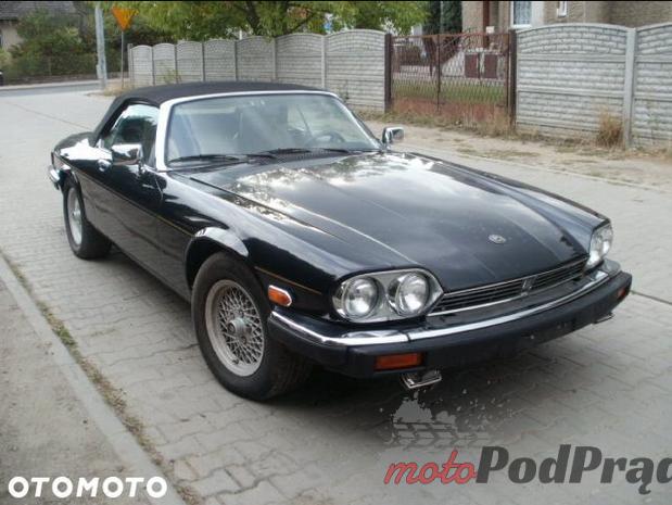 jaguar Hity Allegro #10